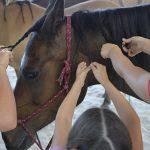 cheval_tresses