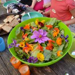 salade_fleurs